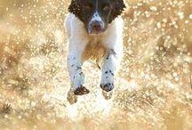 Doggies / Staveley Dog Services Digital Develoment