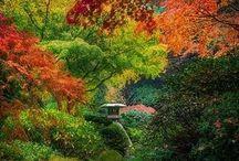 Gardening, landscaping, soft landscaping, garden design, plants, plante, tuin,