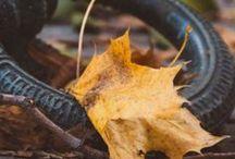 Autumn/Fall/Herbst / Herbst - Blätter - Leaves - Foliage - Natur - Nature - Fotografie