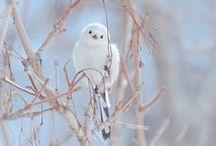 mes oiseaux... / Les oiseaux c'est ma passion !