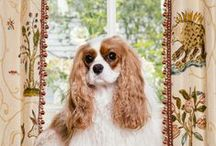 Darby Does Design / Portraiture of the beloved Prince Darby, all things Cavalier, and all things Designing Diva Dogs!  When he's not Designing, he loves to blog, so check it out at http://ericrossinteriors.com/blog
