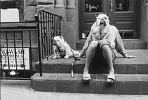 French bulldog & New York City / Dogs and the City