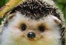 animales bonitossssssssssssssssss / bonitossssssssssssss