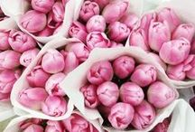 Pink / pink, pink flowers, pink decor / by Desire to Done | Tips for Entrepreneurs + Virtual Assistants