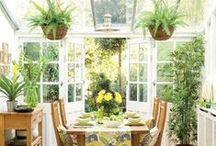 Plants / by Liliana Hart