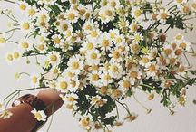 nature / Flowers, animals &...