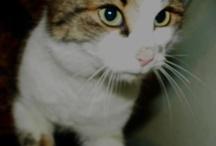 Meow :) / I say meow: that means Hello, I like you