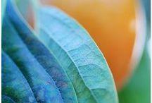 // Color Inspiration \\ / Color Inspiration sets.