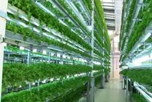 Future Man Agriculture / Implementing innovation to increase yields and localize production