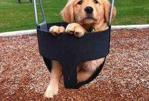 Pets / Cuteee