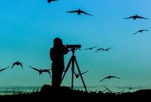 Réserve Ornithologique le Teich