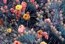Garden & Botanical / For the love of flora & fauna