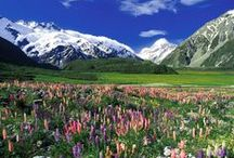 New Zealand / beauty of NZ