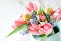 SPRING / Best of Flowers. Best of Awakening. Best of Spring.