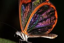 butterflies, insects... / amazing creation