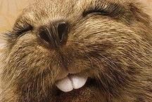 Zwierzęta też się uśmiechają