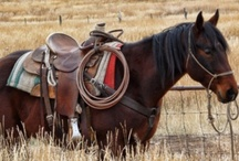 A Little Bit Country / Cowboys, Cowgirls, Western, Tack, Rodeo, Bulls, anything country! My inspiration, my kinda life! / by Julia Breckenridge Sellers