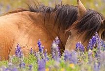 Horses / by Julia Breckenridge Sellers