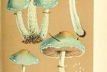 Pilze - Mushrooms