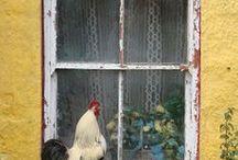 Chickens .....