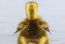Dieren / Lieve, schattige of juist stoere diertjes op foto's of tekeningen!