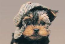 AdOrAbLe / cute & adorable