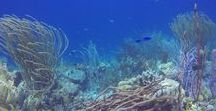Coral Views / Some random pictures of coral reefs. Corals are our favorite animals.