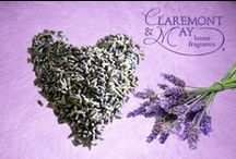 Lilac & Lavender / A classic, floral fragrance of lavender entwined with a hint of Lilac