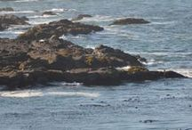 Seascapes of Sea Ranch / The #ocean views from Abalone Bay's oceanfront location and surrounding area are marvelous Sea Ranch  http://www.searanchabalonebay.com/ #AbaloneBay #SeaRanch, #vacation #VacationRental #vrbo #VacationHome #Mendonoma