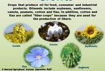 Australian Ag - Oil Seeds