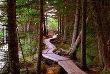 Handle Bars & Dirt Trails / by Calvin J Hobbes