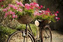 ♥ Secret Garden Dreams ♥ / inspirations in my garden