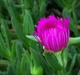 Flowers / Fotografía de flores y plantas