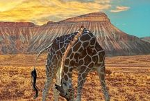 Africa / Photos of different Places in Africa