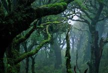 Enchanting Forests