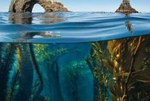 The Great Ocean Blue