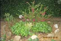 pollice verde / Il mio giardino