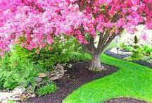 Gardening - Trávnikové hnojivá