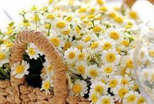 Schöner Frühling