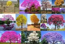 ↟Fabulous Trees↟ / Thank you for following. Have fun pinning. / by ☀️✿Lenora✿☀️ Philbert✿☀️