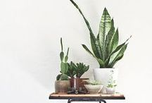 plant-y