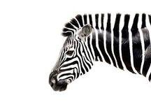 / fauna