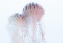 / sea creatures