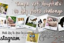 30 Day Photo Challenge! / Make sure you are following us on Instagram @tampavet. Every day in June upload the pic of the day to your instagram and include #tampavet and @tampavet. Win great prizes!