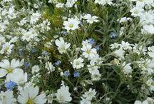 Garten / Alles Schöne im Garten