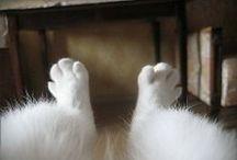 """who said """"meow"""""""
