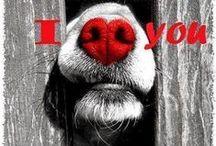 Hearts / I ♥ u