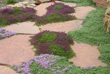 Spencer & Spencer Gardens / Establishing outdoor living space and xeriscape gardens in the low foot hills of the Rocky Mts.