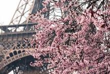 Shades of pink / Оттенки розового