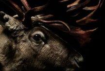 Fabulous animals / Сказочные животные